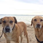 Site Update, Dogs, & See You In Texas and Rhode Island!